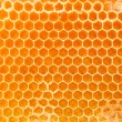 Stock Photo: Beer honey in honeycombs.