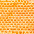 Beer honey — Stock Photo