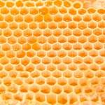 Beer honey — Stock Photo #10045001