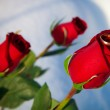 Red rose and ring — Stock Photo