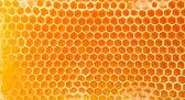 Пиво мед в сотах. — Стоковое фото