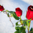 Red rose and ring — Stock Photo #10118032
