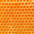 Beer honey in honeycombs. — Stock Photo #10119741