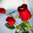 Rose and ring. Winter. - Stock Photo