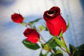 Rose e anel. inverno. — Foto Stock