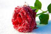 красная роза во льду — Стоковое фото