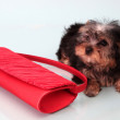 Small doggie. — Stock Photo
