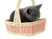 Kitten in a basket — Stock Photo