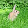Rabbit on a green grass. - 图库照片