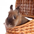 Small rabbit in basket ,isolated. — Stock Photo #10203023