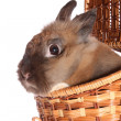 Small rabbit in basket. — Stock Photo #10203068