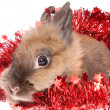 图库照片: Small rabbit with tinsel.