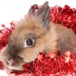 Stock Photo: Small rabbit with tinsel.