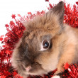 Foto Stock: Rabbit with tinsel.