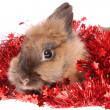 Foto Stock: Small rabbit with tinsel.