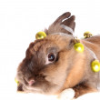 图库照片: Small rabbit with garland.