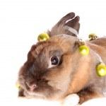 kleine konijn met garland — Stockfoto
