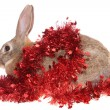 Rabbit with a tinsel — Stock Photo