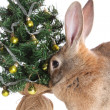 Rabbit with a fur-tree. - Stock Photo