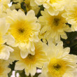 Bouquet from white chrysanthemums. — Stock Photo