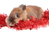 Rabbit with tinsel , isolated. — Stock Photo