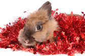 Small rabbit with tinsel. — Stock Photo