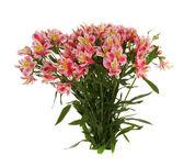 Buket pembe çiçekler, izole. — Stok fotoğraf