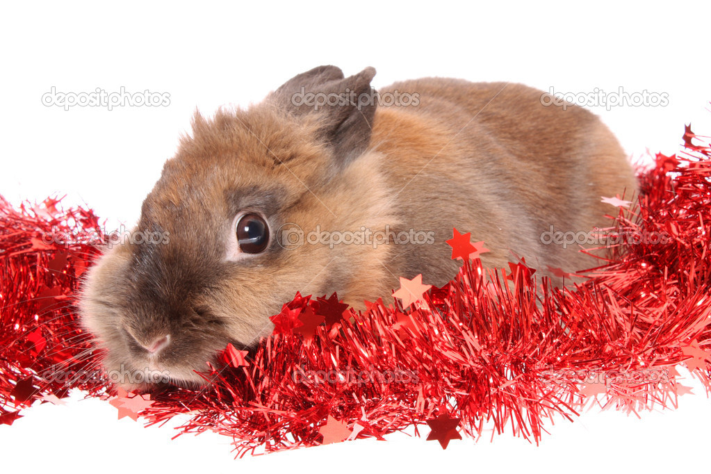 Small rabbit with tinsel on a white background, is isolated. — Zdjęcie stockowe #10461769
