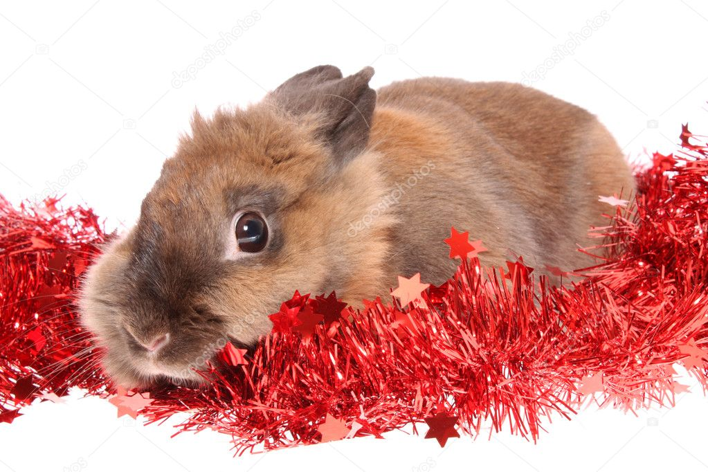 Small rabbit with tinsel on a white background, is isolated. — Photo #10461769