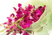 Orchid bouquet,isolated. — Stock Photo