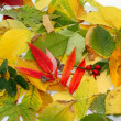 Autumn leaf as background — Stock Photo #8008786