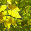 Autumn leaf as background — Stock Photo #8009129