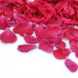 Rose Petals as background - Stock Photo