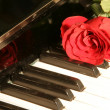 Red rose on piano key — Stock Photo