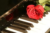Red rose on piano key — Stockfoto