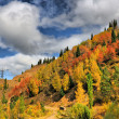 Landscape autumn in mountain — Stock Photo