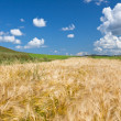 Wheaten field — Stock Photo #9463050