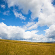 Meadow of Inner Mongolia — Stock Photo #9464274