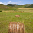 Meadow of Inner Mongolia — Stock Photo #9464719