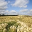 Wheaten field — Stock Photo #9467603