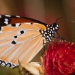 Butterfly — Stock Photo #9469400