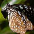 Butterfly — Stock Photo #9469417