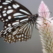 Butterfly — Stock Photo #9469614