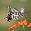 Butterfly — Stock Photo #9469684