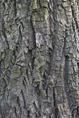 The texture background of the bark outdoor. — Stock Photo