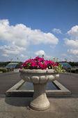 City flower — Stock Photo