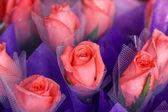 Rose — Stok fotoğraf
