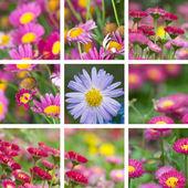 Daisy — Stock Photo