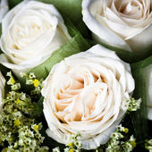 Close-up of the wedding rose. — Stock Photo