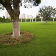 The tree of a park outdoor — Stock Photo